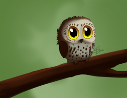 Cuute Owl ^-^ by Saerl
