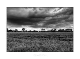 stormy field by e1sbaer