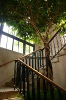 Tree and Staircase by dseomn