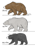 Bear  studies by Dj-Rodney