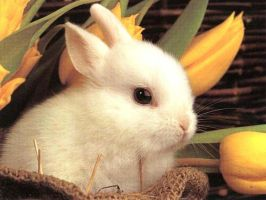 Baby bunny by Coyotechina