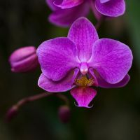 MOBOT: Orchid VIII by breaking-reality