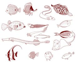 Fishes by yllya