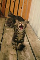 Yawn.. by Diffethan