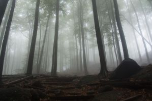 Secret path in the mist by MirachRavaia