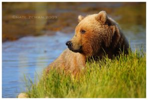 Bear Bath by Nate-Zeman