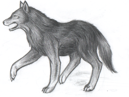 Wolf by Khaoslager