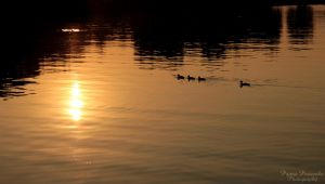 lake+sunset+duck family= by panna-poziomka