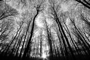 the witch trail by augenweide