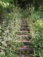 Stock - Overgrown Steps III by rockgem