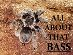 Curly Hair Tarantula Is- All About That Bass! by Jenn-Coney1976