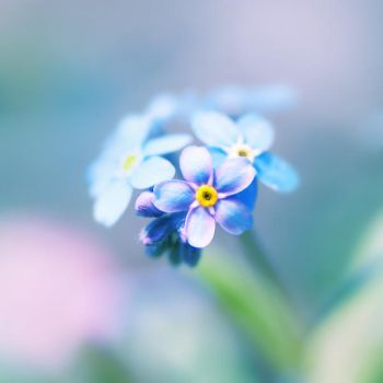 think about me, forget me not by Megson