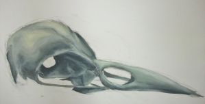 Bird Skull Study #1 by Contrast-and-Colour