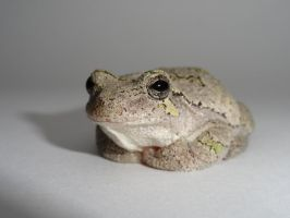 Garbage The Gray Treefrog by MariahEAM