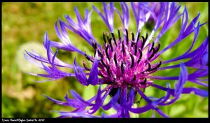 Crazy flower by TortueBulle