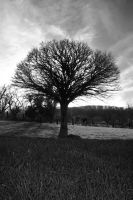 Dark Tree by Agulor