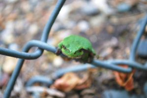 Tree frog by darkguitar3000