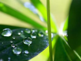 Natures waterdrops by evinio