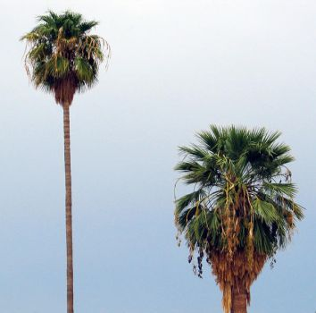 Palms by knothere