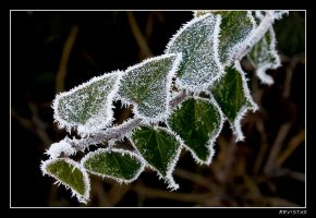frosted leaves by RRVISTAS