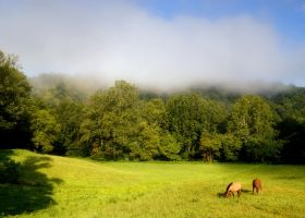 Morning Graze by TimLaSure