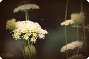Flowersss by thorneater