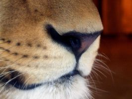 lion nose by crazyhorse42
