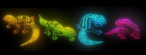Leopard Geckglows by Bubasti333