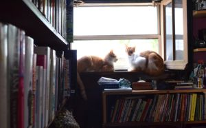 Library Cats by coffeenoir