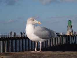 seagull 2 by GothicKitzzy