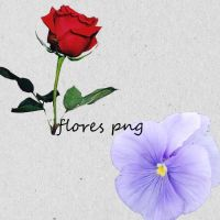 flores png by feelingthechaange