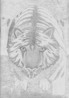 Shakkara Tiger Sketch by Shakkara1