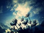 dill by marjorie1206