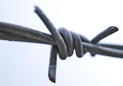 barbed by Andrewflees