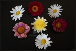 Flowers  Mb10 by alfa