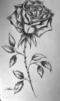 Singe Rose by x-thesmallprint-x