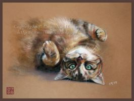 Cat in pastel by CamillaMalcus
