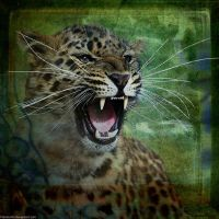 Wild And Untamed by Fotomonta
