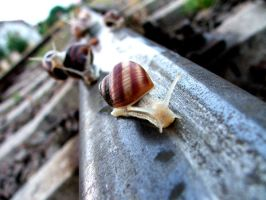 Road of Snail by SimX