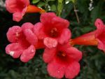 Red Blooms Along A Brown Ditch by tmulcahy