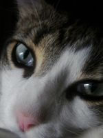 the eyes of a cat by carThaisa