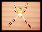 Spiderrrr by anitaxlove