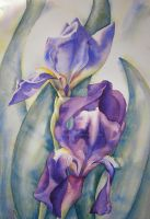 Two Irises by IvieMoon