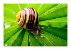 Snail on the Green Way by erra