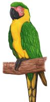 Dominican Macaw by RSNascimento