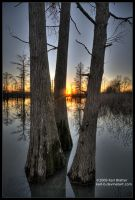 Sunset Through Cypress 2 by Karl-B