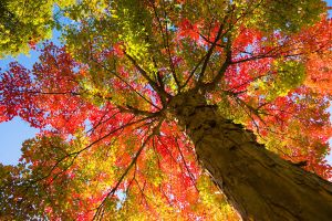 Autumn Tree 17068457 by StockProject1