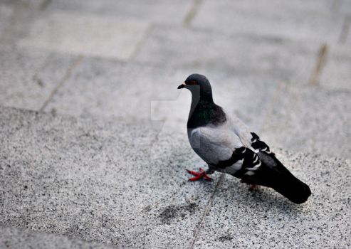 Pigeon FTW by poondq