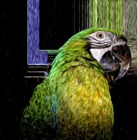 Kiwi the MilliGold Macaw by Lion6255