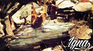 Butterfly in the wood by PythonIt